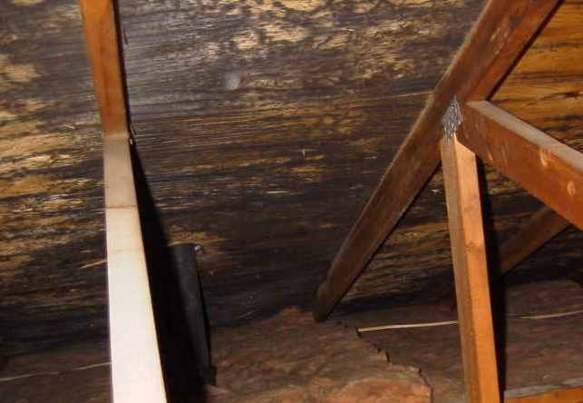 Vishey Home Inspection - Actual Attic on House Found During Inspection