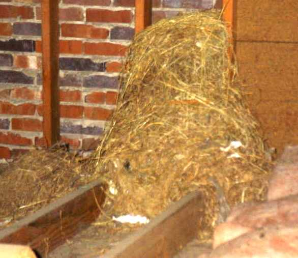 Vishey Home Inspection - Actual Bird Nest in House Found During Inspection